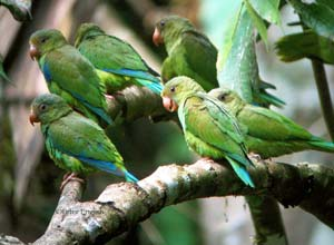 Parrots in rainforest