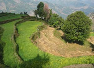 Terraced fields on trek