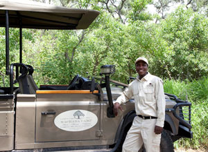 Go for game drives from Machaba Camp
