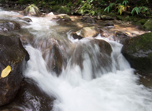 Waterfall in the cloudforest