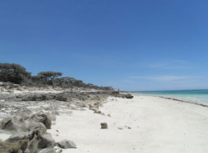 Take a walk along the beach at Ifaty