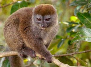 You should see many lemurs in Ranomafana