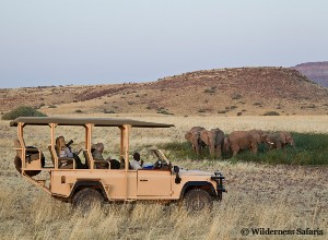 Game drive at Desert Rhino Camp