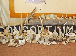 Skulls collected on the Skeleton Coast