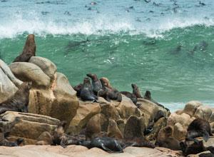 Visit the Caoe Fur seals at Cape Cross