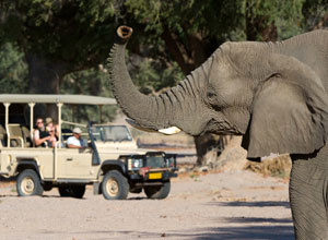 Damaraland Camp safari