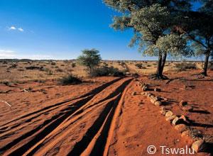Kalahari landscape at Tswalu
