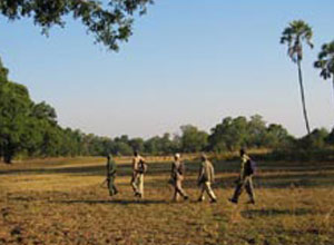 walking safari at Island Bush Camp